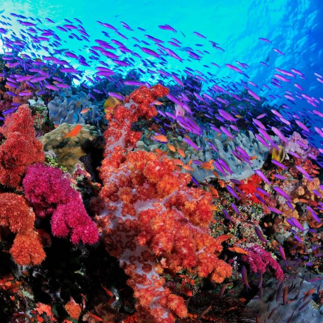 Why does Fiji have the World's Best Diving?