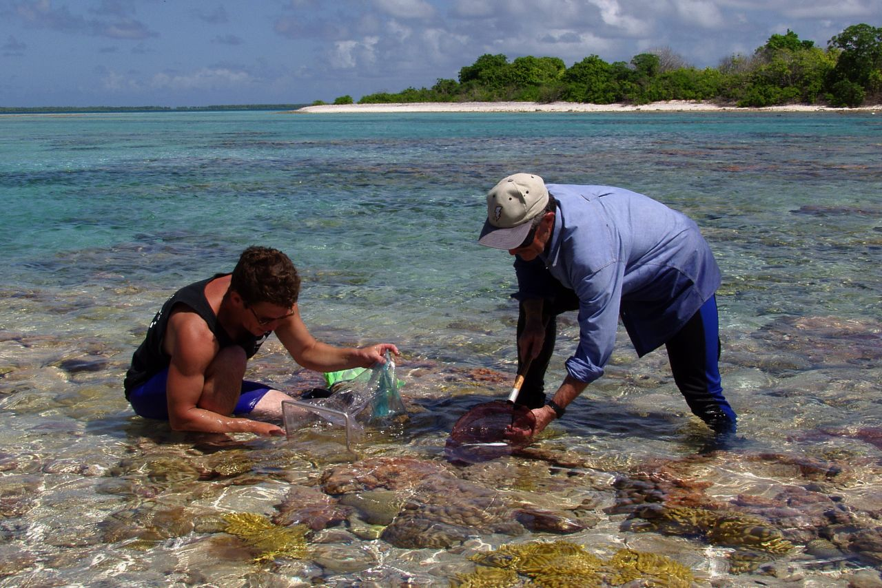 Drs. Steve Bailey and Gerry Allen collect fish in the tidal zone at Nikumaroro