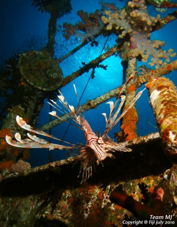 Lion Fish hovering on the wreck at Cat's, taken by Michael
