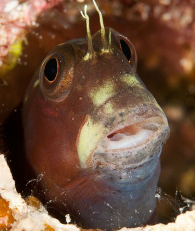Blenny pops out for Marty