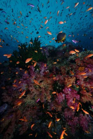 Fabulous colorful reefs of Fiji - taken by Tony