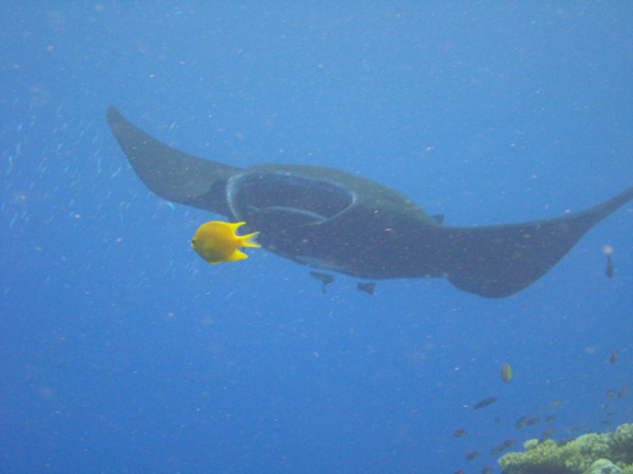 Ernie is well positioned when the Manta swoops in at Vatu Vai