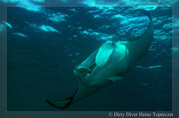 Manta action in Gau captured by Heinz