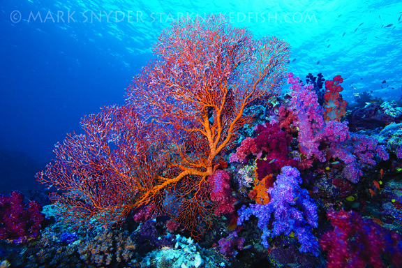 Stunning reef scene; taken by Mark S