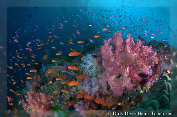 Stunning reef shot - taken by Heinz