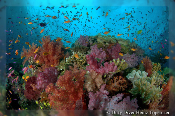 Soft Coral heaven - taken by Heinz