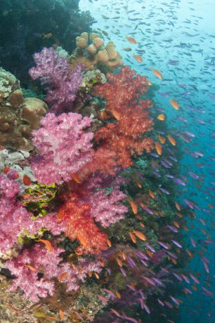Soft coral paradise - Fiji: taken by Gloria