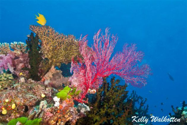 Beautiful reef scenery