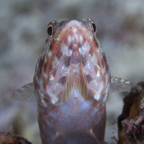 Lizardfish by Darlene
