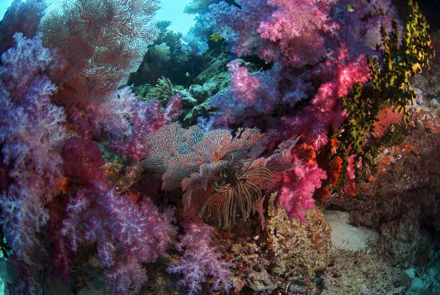 Soft Corals by Jane