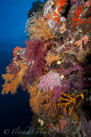 Stunning soft coral garden; Taken by Fletcher F.