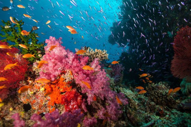 Fiji Colour by Ed