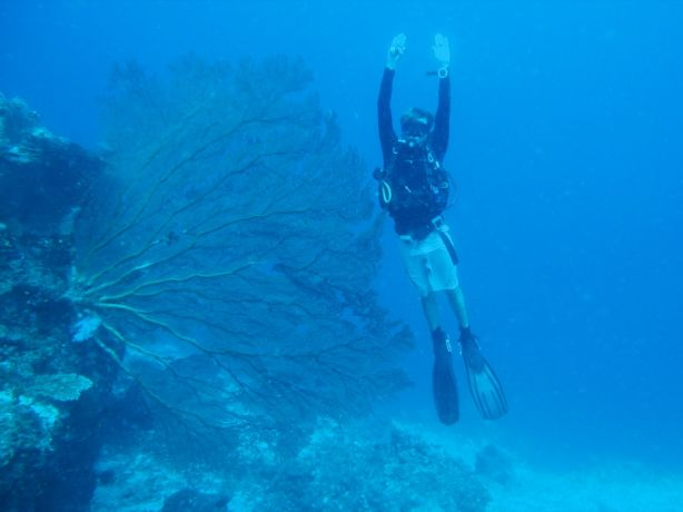 Let's see, I'm about 9' from fingers to fintips. That makes this sea fan more than 10' - by Florent