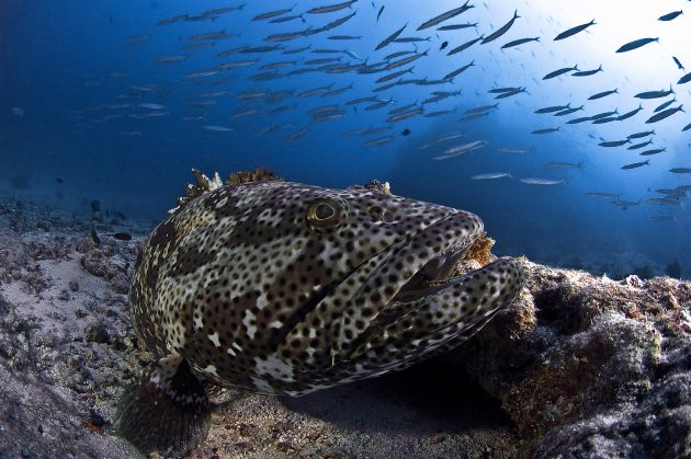 Grand Central Grouper by Erwin Filius