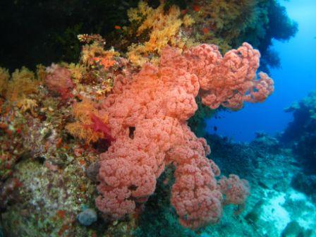 Beautiful Soft Coral from Allen