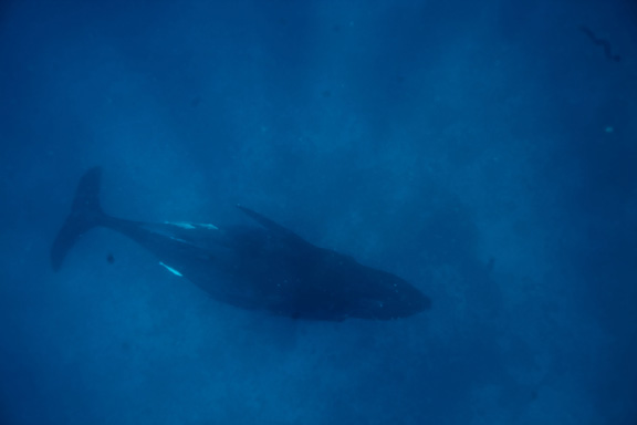 There are Whales in Fiji & Alan got the proof