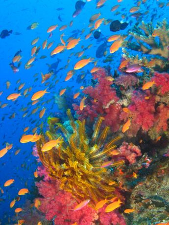 John captures the fabulous colors of Fiji finest reefs