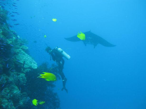 Sarah F. captures the magic moment a manta frolics behind Rob whilst he diligently studies the reef for critters!