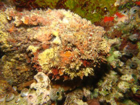 Stonefish. Taken by Allen