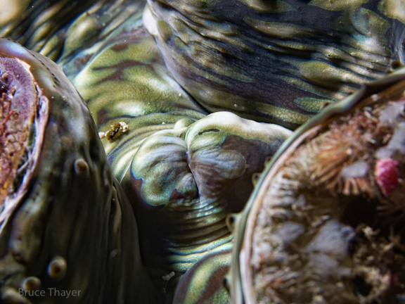 Close up of a Clam or abstract art? - taken by Bruce