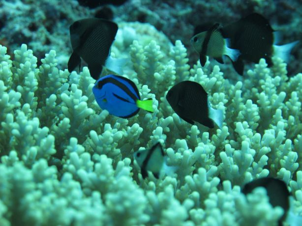 Sarah hangs out with Dory in Namena