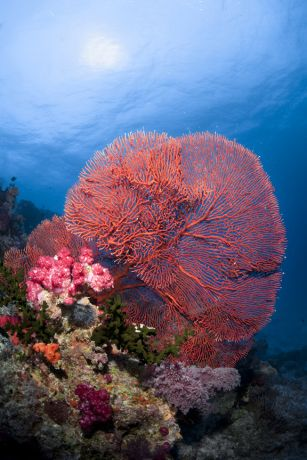 Huge sea fan - taken by Steve