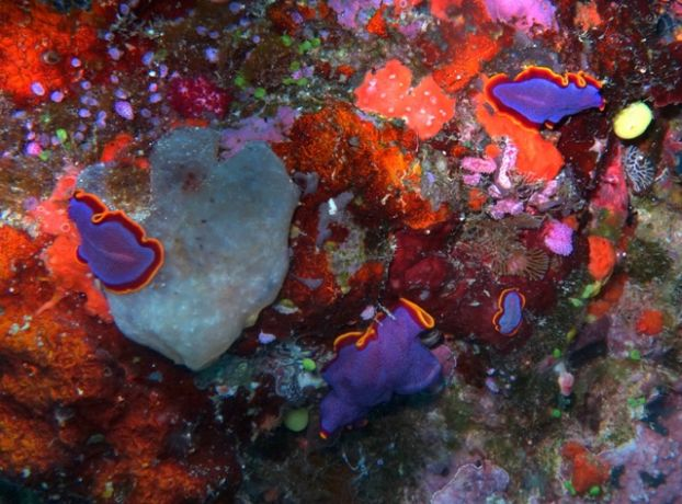 Flatworm rumble - by John