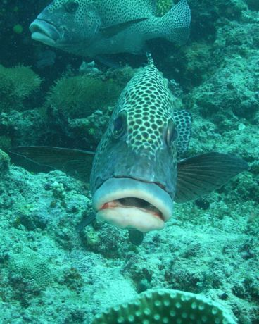 A fish with botox lips - taken by Ray