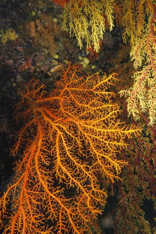 Mount Mutiny and it's wonderful soft coral - taken by Patrick