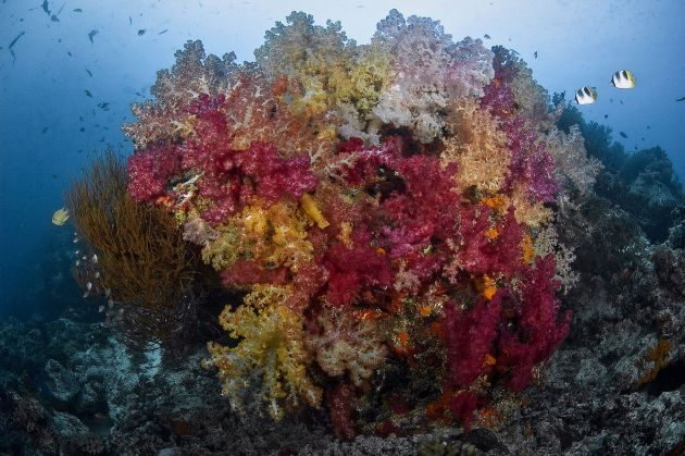 Nigali Passage Soft Corals. Photo by Erwin Filius