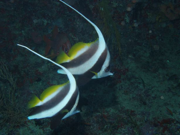 Moorish Idols: taken by Ross & Terri