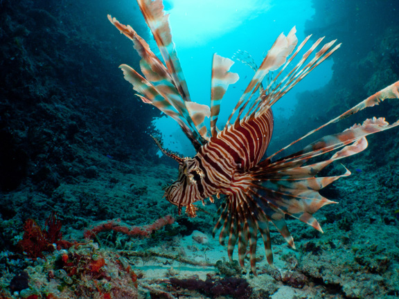 Jack sees the beauty in a Lion Fish pose!