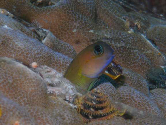Blenny poses for Mo
