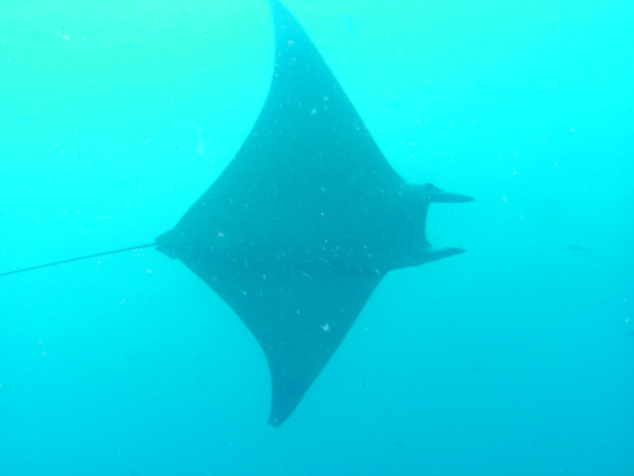 A large black manta flies past the Nigali Passage - taken by Mo