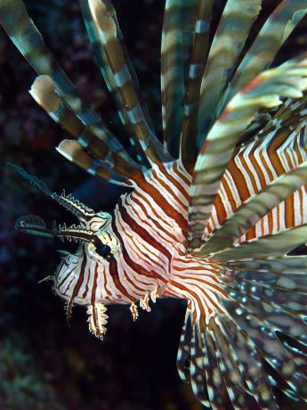 Lion Fish poses for Stacy
