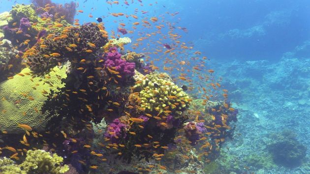 Reef in bloom - by Steve