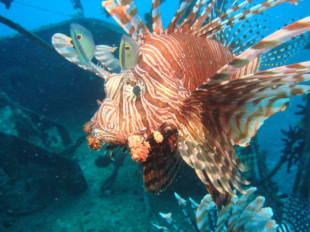 Lionfish by Gary