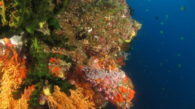 Scorpionfish with a view - by Christian