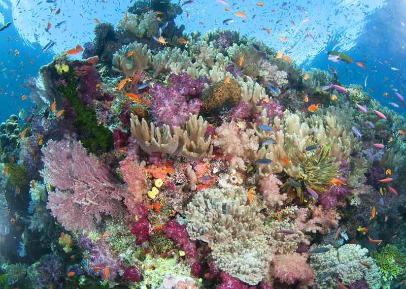 Pretty reef scape by Mark