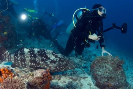 Nagali Passage grouper, Taken by Linda