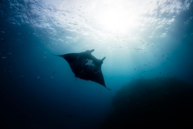 Yes, we also saw mantas - by Hergen