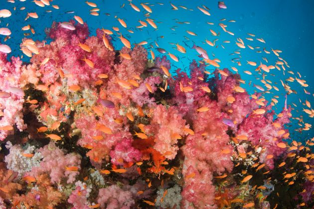 Stunning soft coral: taken by Jim
