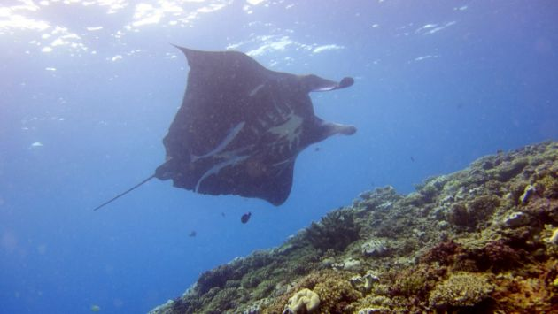 Because you can NEVER have too many manta pictures - by Pete