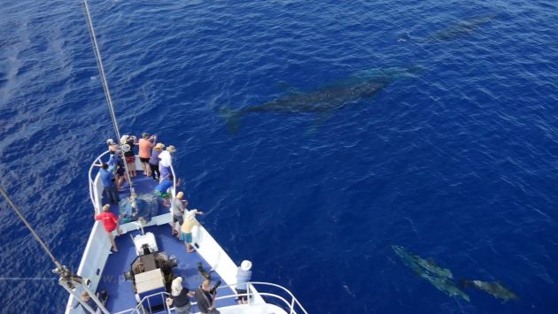 Whales AND dolphins AND Nai'a, Bravo! - by Peter
