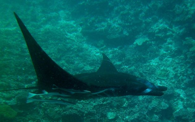 Manta, you are clear to land - by Steve & Liz
