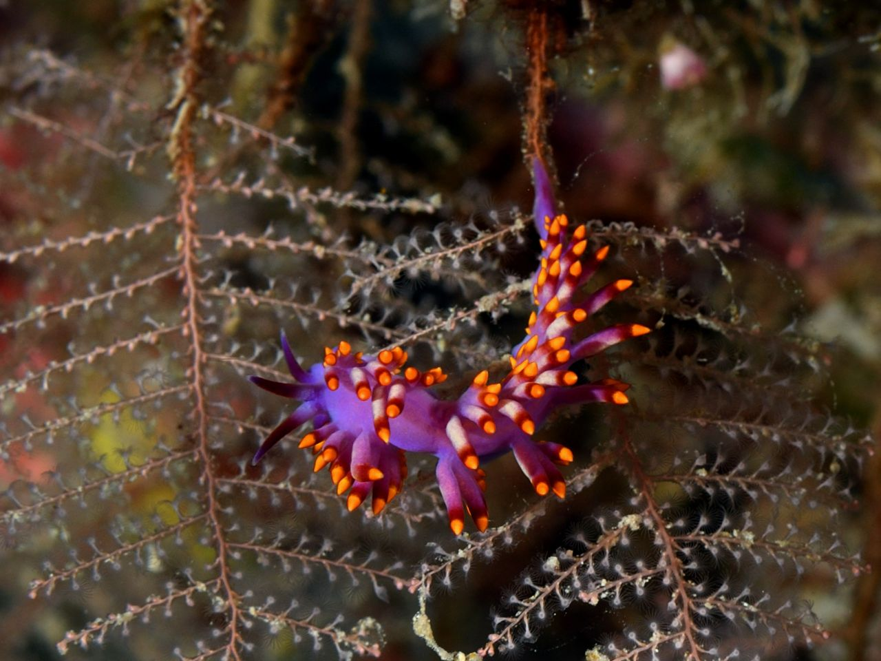 Fab-Flabellina by Andrew